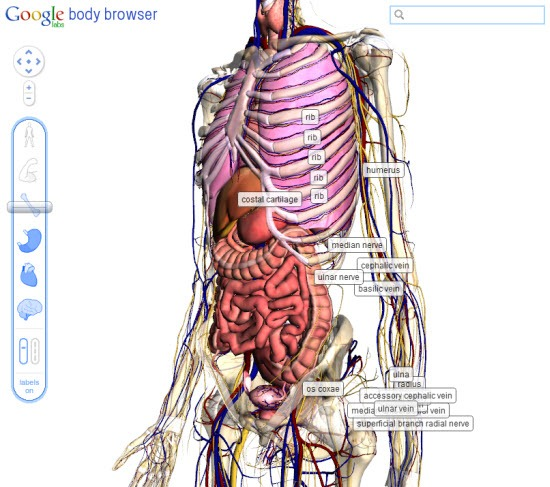 Google Launches Body Browser Instant Fundas