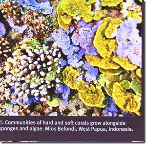 june 10 hard & soft coral, sponges & algae- lilac, gold yellow & white