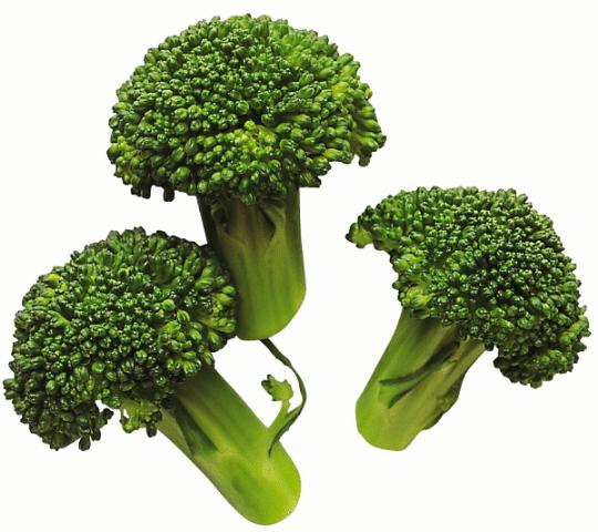 [broccoli[3].png]