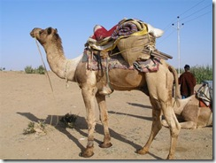 CamelLoaded