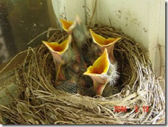 birds-baby-1