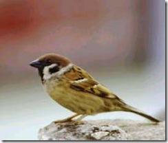 birds-of-india