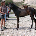 Camille (jeune cavalière, galop 7), et son poulain, Art d'amant guérets. Il est le fils d'Isa d'Ouest, nous lui souhaitons une carrière au moins aussi bonne et régulière que celle de sa maman ! Il a déjà presque un fan club !