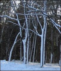Treedesign4