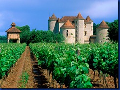 vineyard_cahors_lot_valley