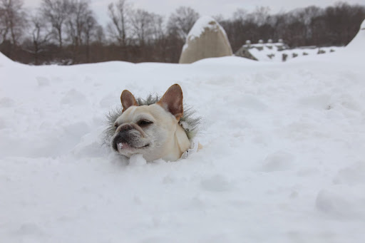 Francesca!  I'm sinking!  This must be quick snow!