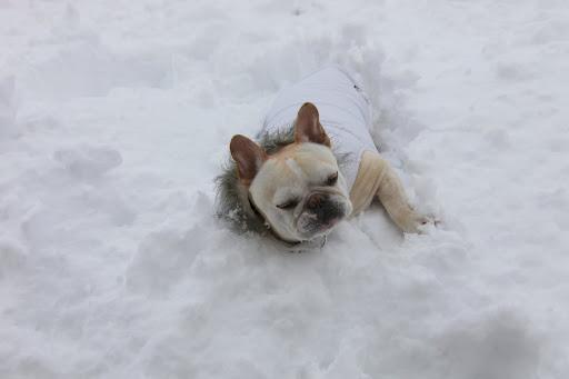 Doggy paddle!   Doggy paddle!