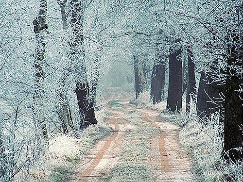 Winter_by_voorikvergeet