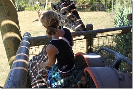 Zoo 019