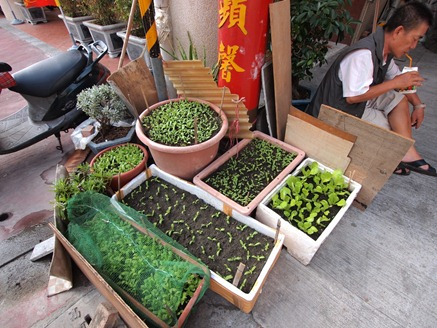 Scene: Kaoshiung (people growing vegetables)