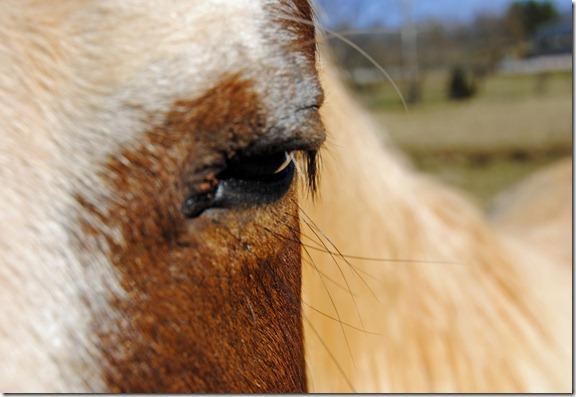 Blind Horse