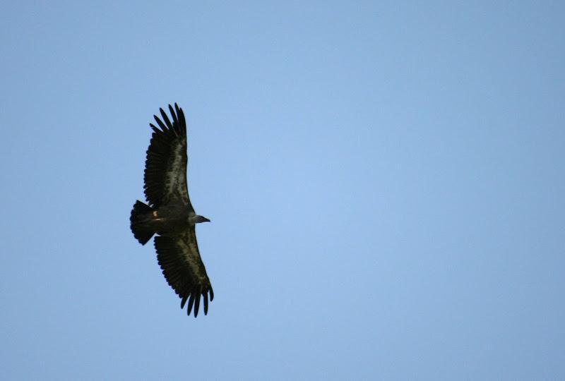 El otro pájaro