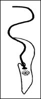 Epimastígota