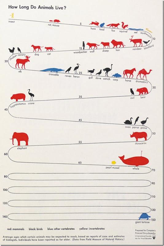 cuanto viven los animales