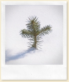 PineTreeCross-4in