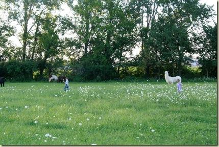 pasture play1