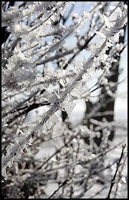 hoar frost1 1-9-11