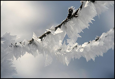 hoar frost3 1-9-11