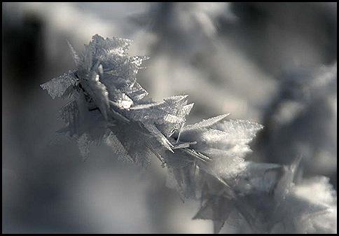 hoar frost4 1-9-11