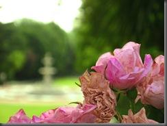 flores con la fuente