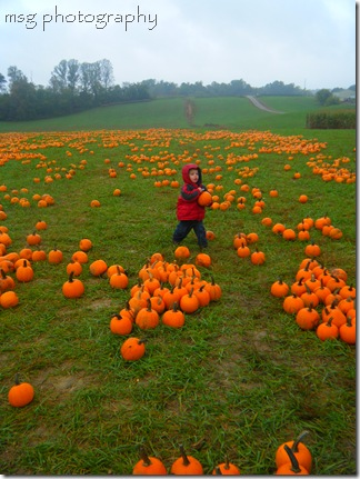pumpkin patch 036