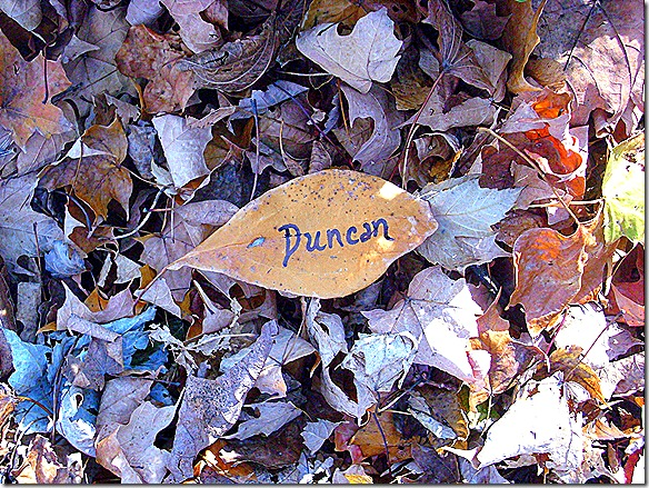 duncan's leaf from Holly