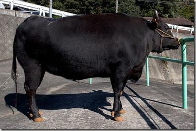 kobe-beef-photo1