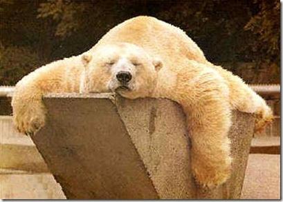 sleepy_bear