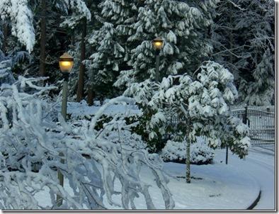Snowy Day 009_thumb