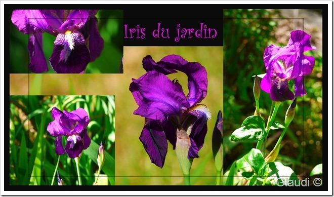Iris_modifié-2