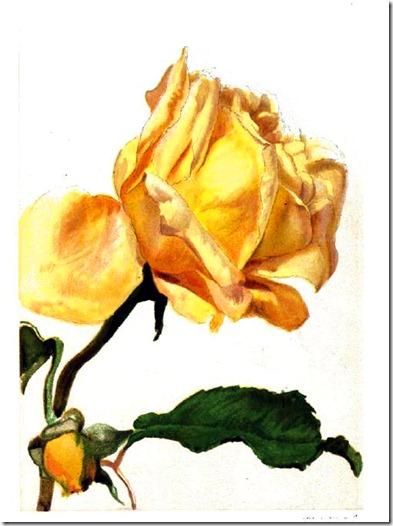 rose3_rpfh