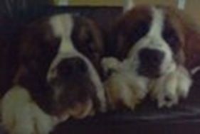 Doggies!!