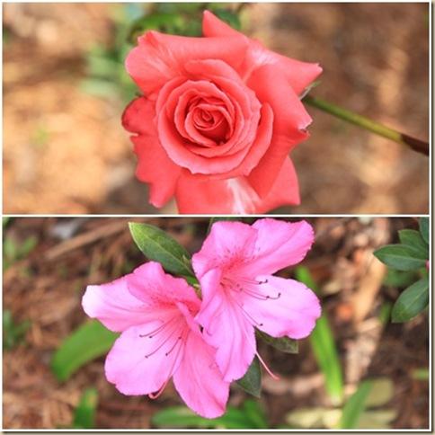 rose,etc
