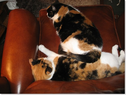 cats in chair 002