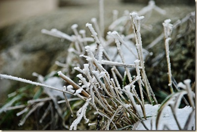 frozen-grass-straws