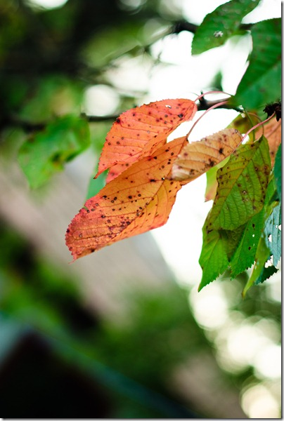sign-of-fall-red-brownish-leaf-1