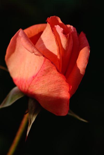 bye-bye-2010-flower