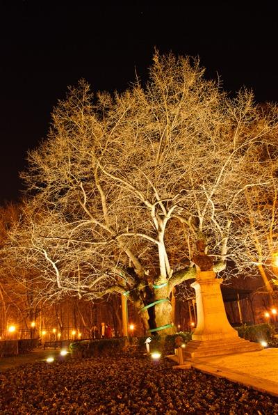 symbol-linden-tree