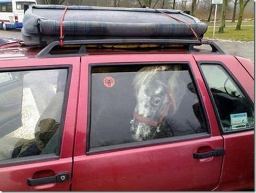 Cavalo dentro de um carro