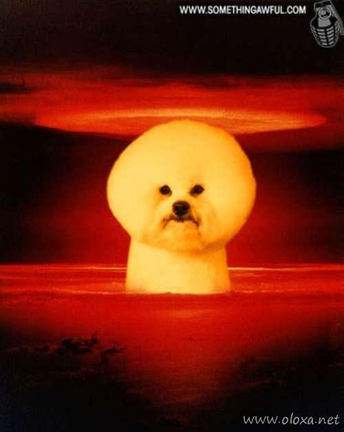 puff-dog-meme-9