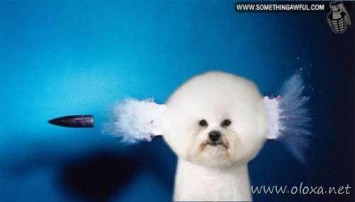puff-dog-meme-14
