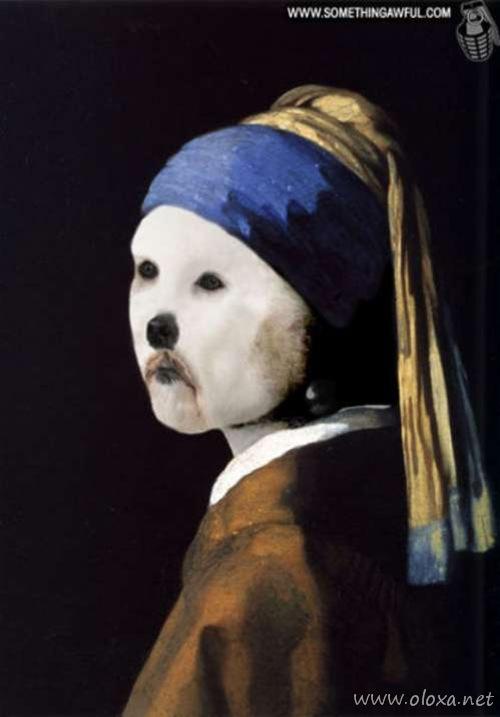 puff-dog-meme-17