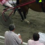 Evaluer le potentiel de chaque cheval