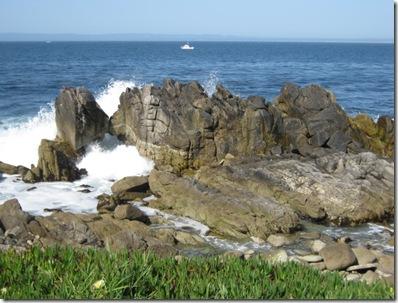 SEA OTTER 2010 041