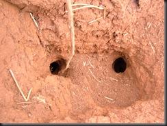 Além das plantas, o solo foi modificado com algum tipo de técnologia!