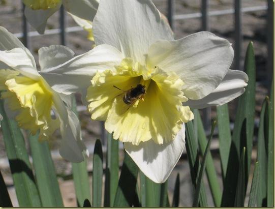 inizi primavera 060