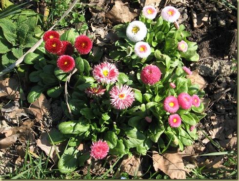 inizi primavera 014