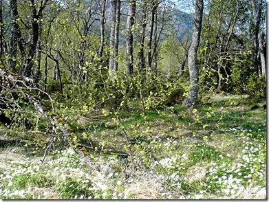 Vårtur i Kvanndalen 004