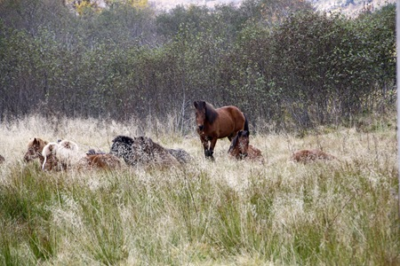 hestemorgen