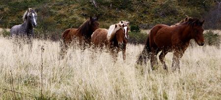 hester2-førred